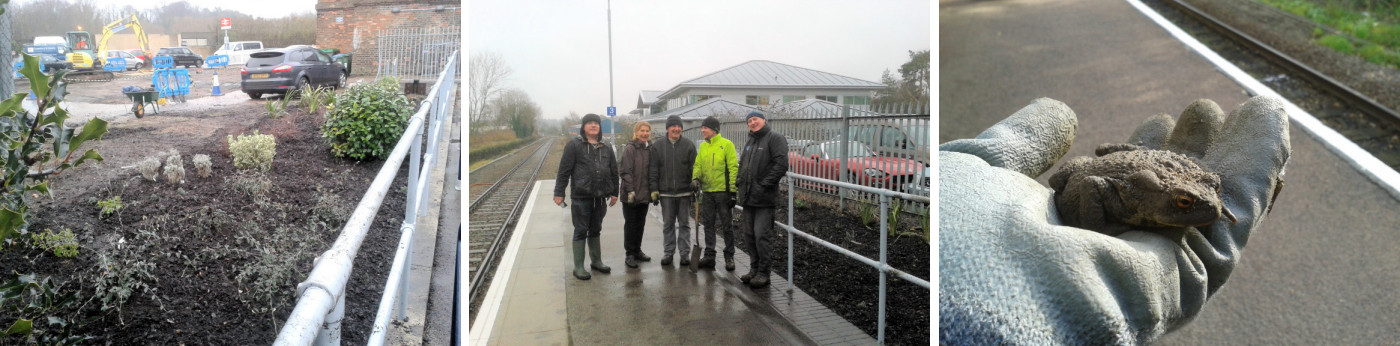 The new garden at Melton station, along with the some of the volunteers who helped plant it, and one of twelve toads re-homed as part of the project