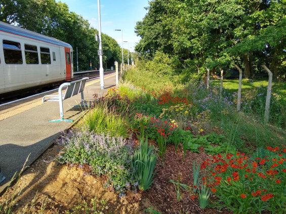 Flower garden at Westerfield Station