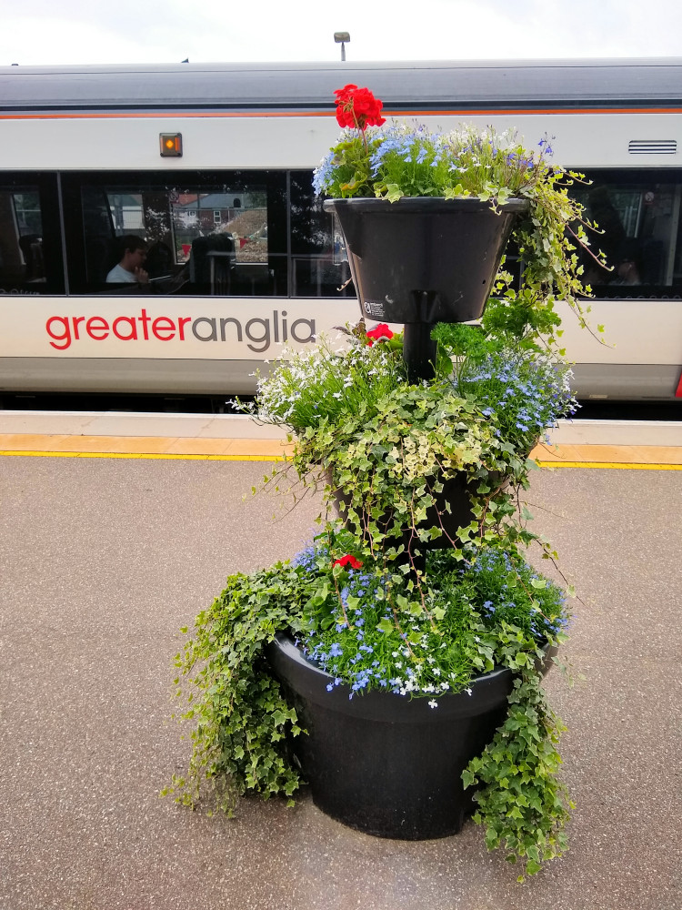 Beccles flowers 9 July 2019