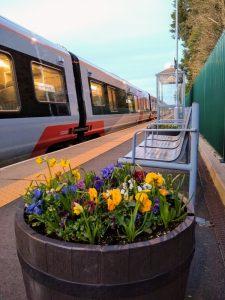 Brampton flowers 12 February 2020