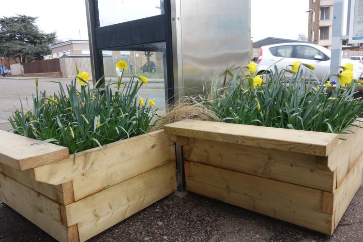 Felixstowe station planters daffodils