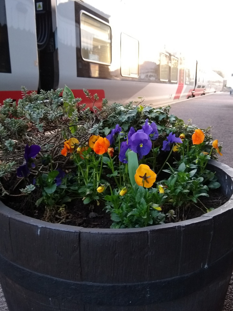 Melton station flowers March 2020