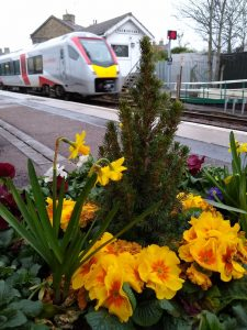 Saxmundham flowers 29 February 2020