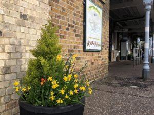 Woodbridge Station Daffodils 4 March 2020