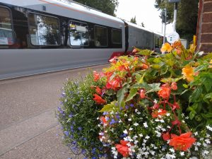 Summertime flowers at Trimley