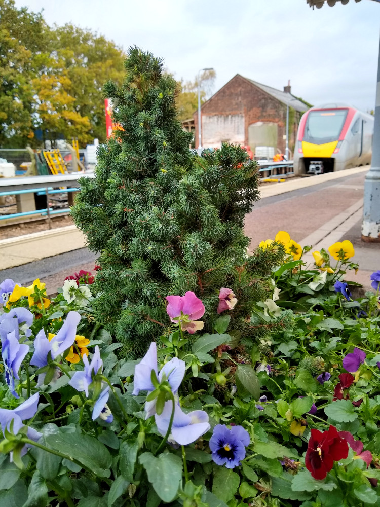Flower tub at Saxmundham Station 30 October 2020