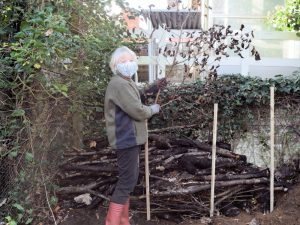 Dead hedge at Westerfield Station - December 2020