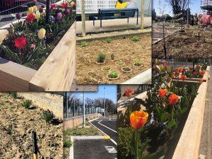 Planting at Saxmundham station April 2021