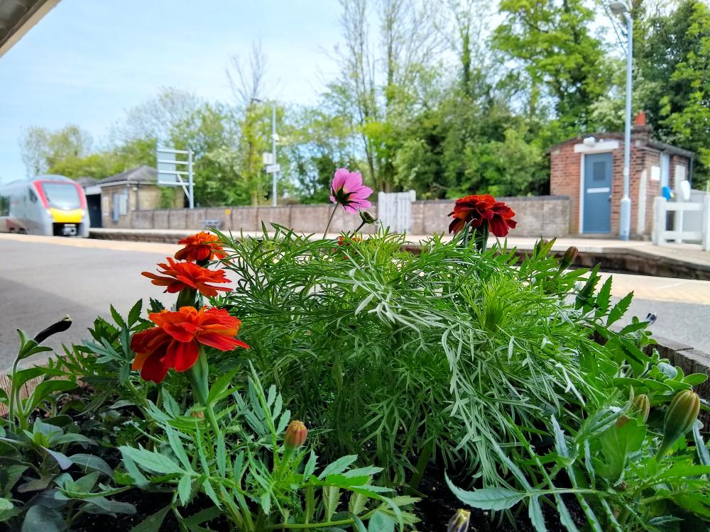 Flowers at Darsham station 28 May 2021