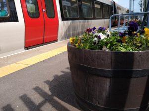 Brampton flowers 28 May 2021
