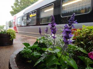 Melton station flowers 9 July 2021